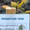 un arbre pour chaque promotion diplômée